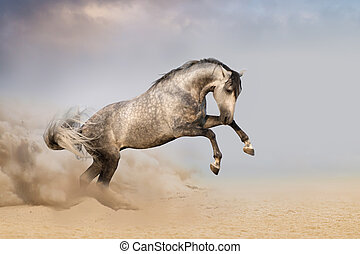 Horse run gallop with dust - Beautifyl grey horse galloping...