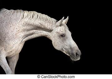 White horse on black