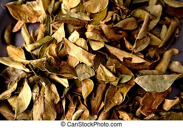Curry leaves - Curry leaves, delicious spice for spicy food...