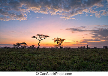 Savanna - Fantasy African lanscape of the beautiful sunrise...