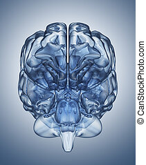 Crystal clear mind - Crystal  brain. Clipping Path