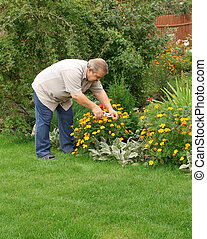 Senior man in a garden - Senior man, looking after a flowers