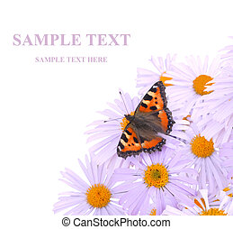 Butterfly - Bright butterfly on lilac flowers