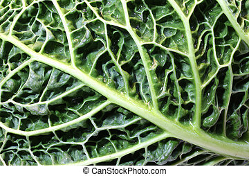 macro leaf of green cabbage - leaf veins of green cabbage...