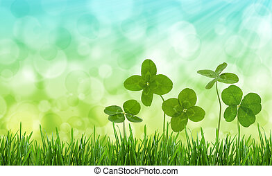 Close-up shot of four-leaf clovers in a field - Four-leaf...