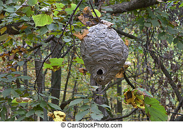 Paper Wasp Nest hanging from a tree.
