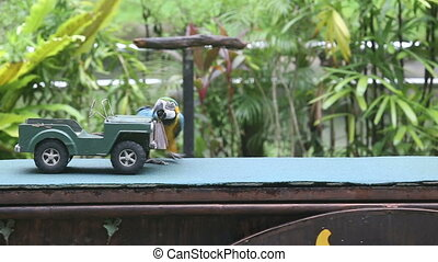 parrot show in bird park - parrot looks under the hood of...