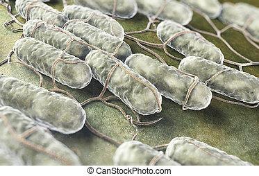 cultura, de, salmonela, bacterias,