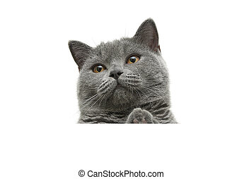cat with yellow eyes sits behind a white banner and looking...