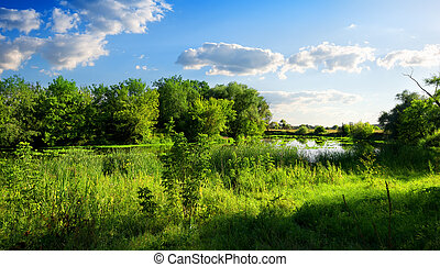 Nature reserve - River in a beautiful green nature reserve...
