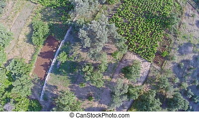 Field on island Mljet, aerial - Copter aerial view of the...
