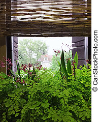 Green plants decorating a rustic style window