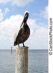 Pelican on a post