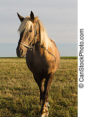 Horse on Pasture - Young horse grazing in a pasture