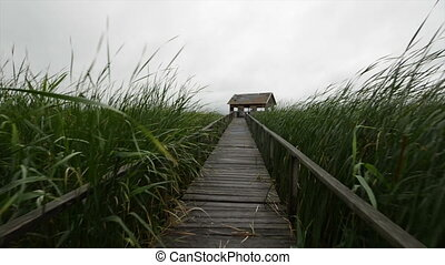 Wooden path trough the reed glidecam footage motion