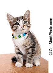 Small pet  - Happy kitten in a bright beads