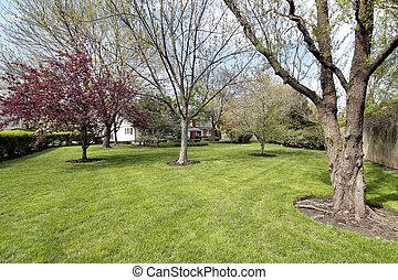 Back yard in spring