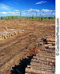 Michigan Northwoods Logging Operation - Jack Pines Pinus...