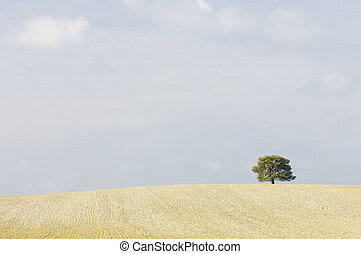 lone tree in a field crop