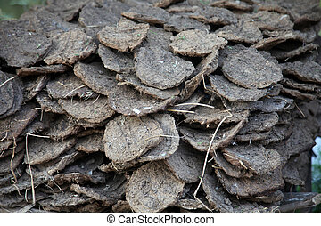 Dry cow dung, India