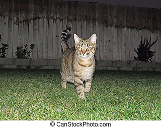 Cat Walking in Grass - animal, animal behavior, animal...