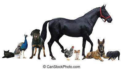 組, 動物