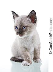 Baby Kitten - Adorable baby kitten sitting isolated on white...