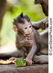 Cute little baby monkey - Adorable little baby monkey eating...
