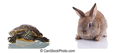Bunny and Turtle - Cute Bunny and Turtle, isolated on white...