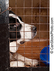 dog sitting in a cage. - The dog sitting in a cage in...
