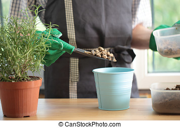 Potting - Man re-potting a rosemary into a flower pot