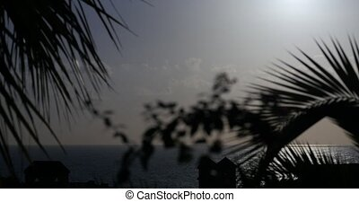 Beautiful morning sun with palm(s) in front, native camera...