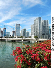 Colorful flowers Biscayne bay skyline photo. Miami florida...