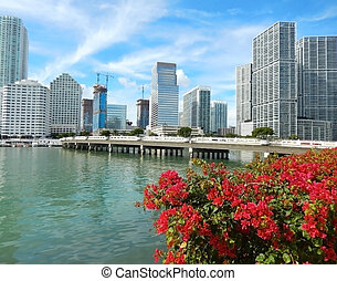 Colorful flowers Biscayne bay skyline photo Miami florida...