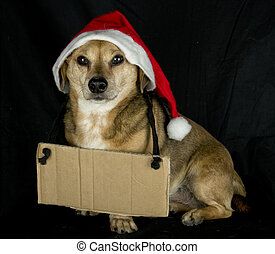 little cartel dog - christmas dog and cartel