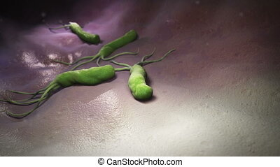HELICOBACTER PILORY - HELICOBACTER PYLORI is a...