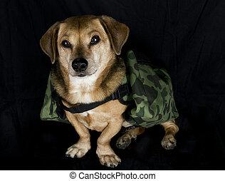 軍, 犬, 仕事