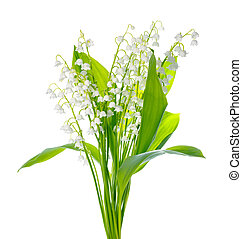 beautiful bouquet of lily the valley flower is isolated on...