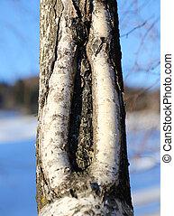 陰道, 裂縫, 樹, 相象, 樹干