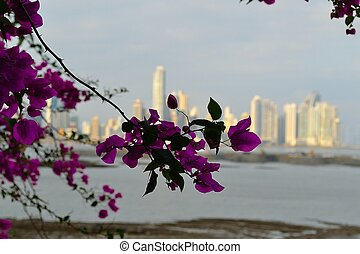 Panama city behind flowers - Downtown Panama City