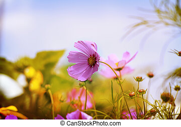 Flowers - Beautiful spring background with flowers