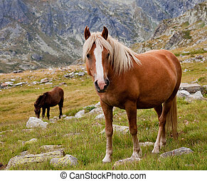 horse in the mountains - brown horse is looking at camera in...