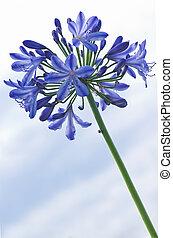 azul, flores, azul, cielo