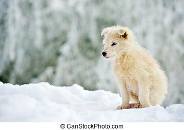 peu, blanc, chien, EXTÉRIEUR, dans, hiver,