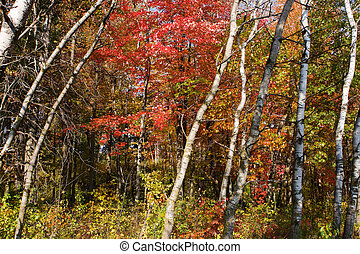 Forest Colors in the Fall - Vibrance of the Forest Colors in...
