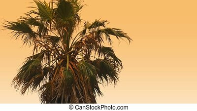 4K, Beautiful morning sun with palm(s)  in front