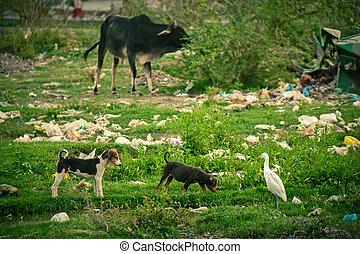 plástico, poluição, durante, animais,