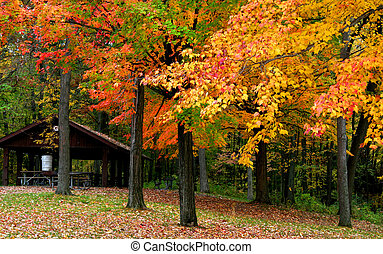 Autumn trees - Bright colored trees in Michigan state park...