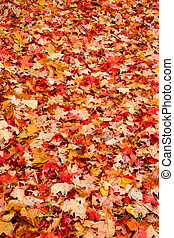 Colors Of Fall - background of yellow autumn leaves