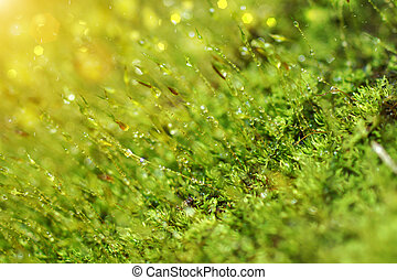 Bark and moss and drop dew.